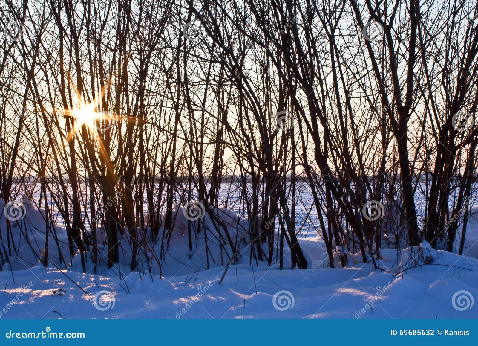Wintersonne, die durch kahlen Baum im Schnee bricht