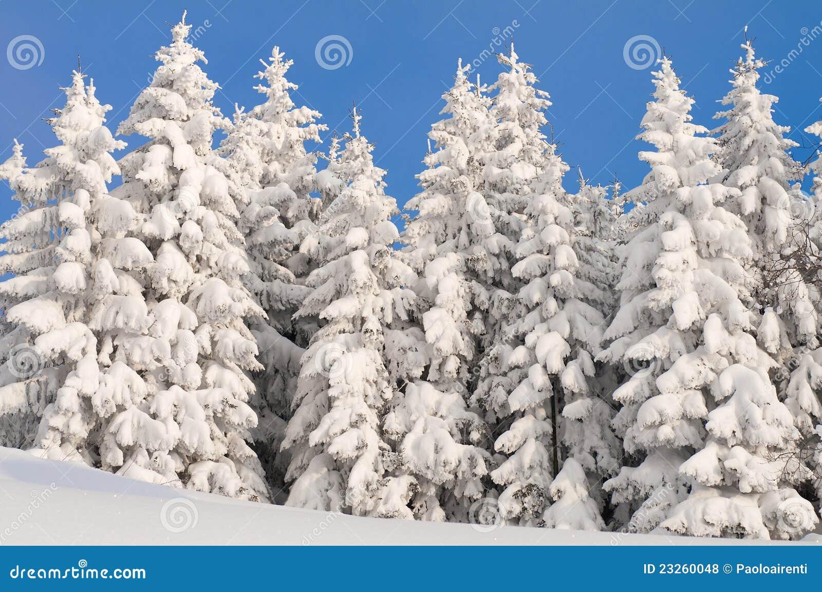 winterszene mit eis und schnee lizenzfreie stockfotos bild 23260048. Black Bedroom Furniture Sets. Home Design Ideas