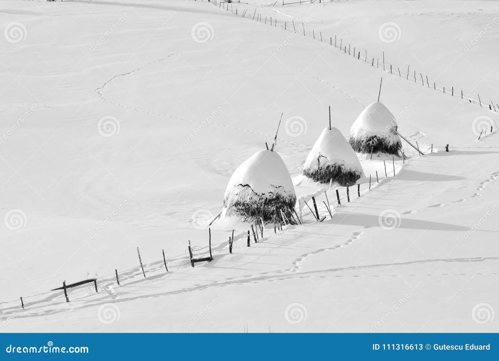 Winterszene in Rumänien, schöne Landschaft von wilden Karpatenbergen