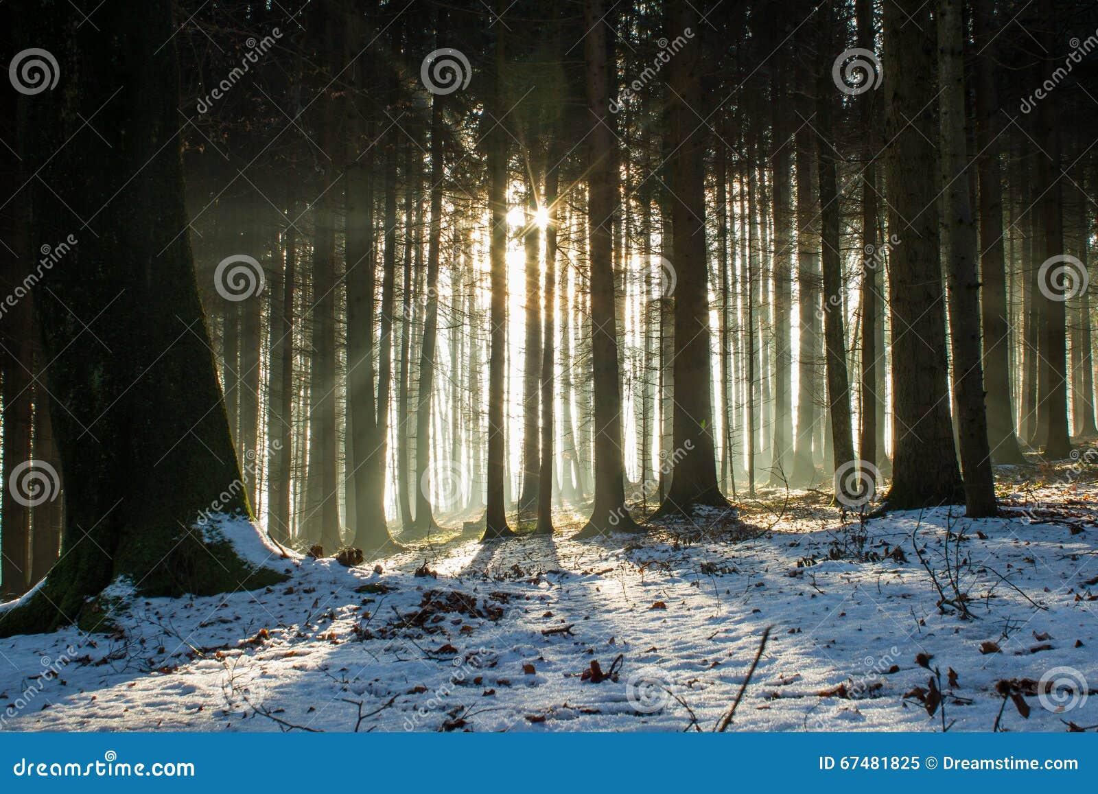 Wintertime леса