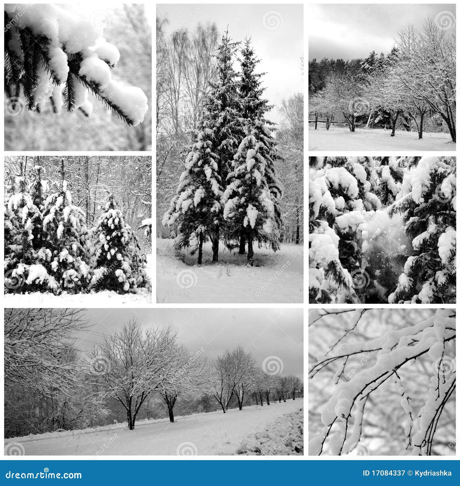 Winterwald schön, Kiefern