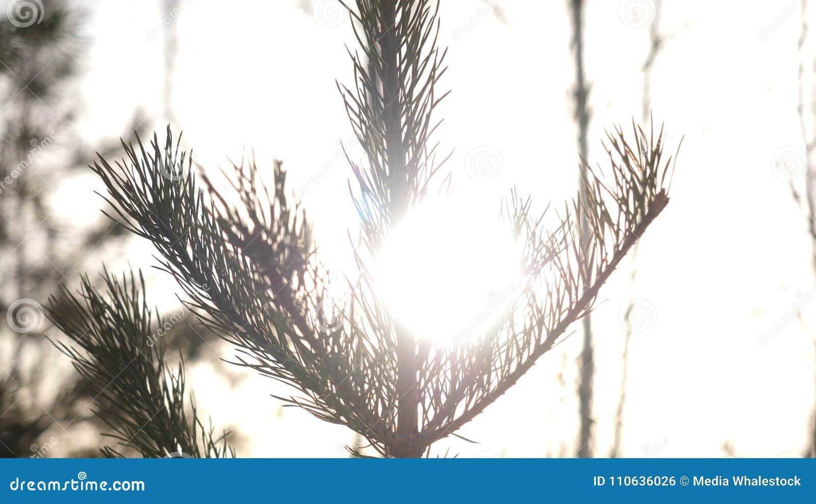 Winterweihnachtslandschaft, Winterschönheit Helle Strahlen der untergehenden Sonne, Sonnenlichtgreller glanz Natürliche Weihnacht
