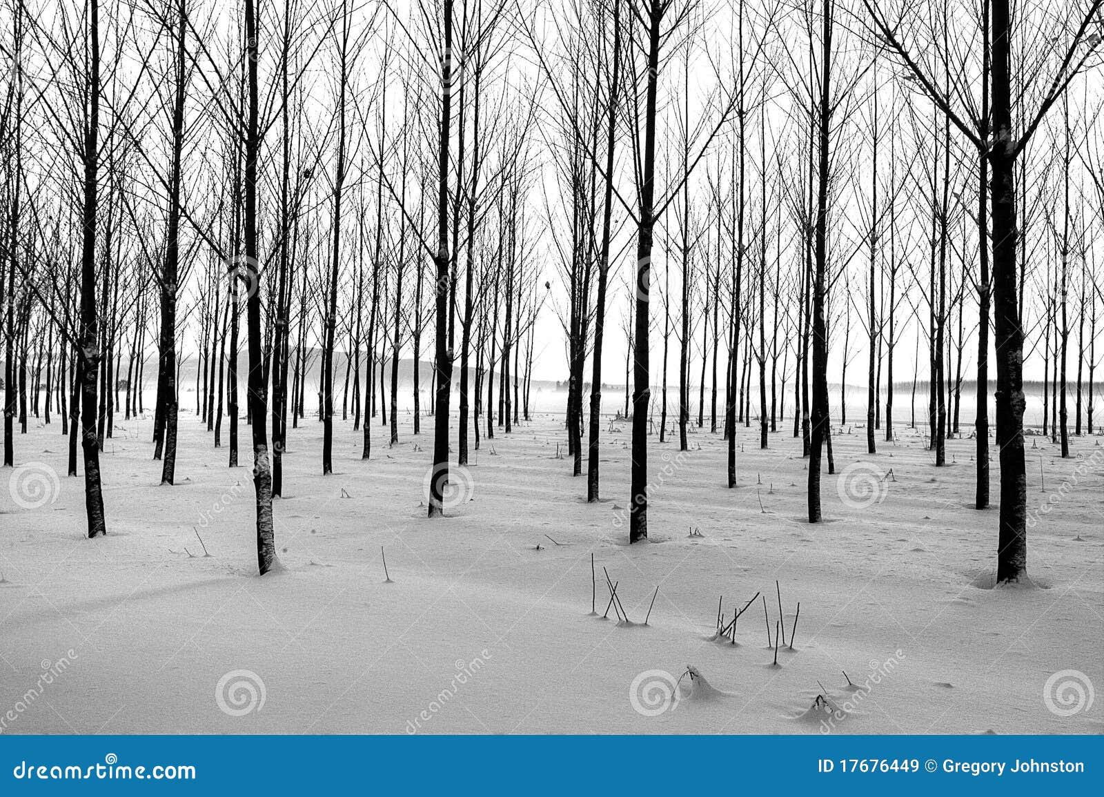 Wiosłuje drzewo zima