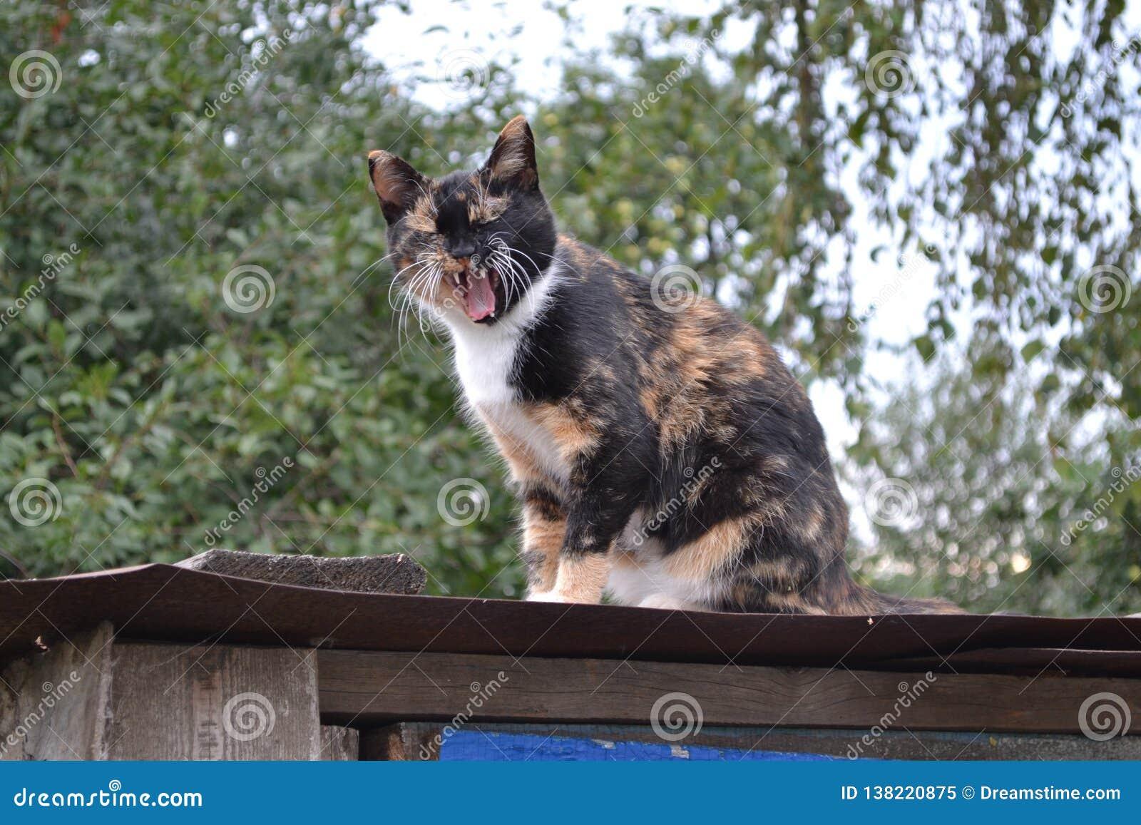 Wioska kot na ławce!