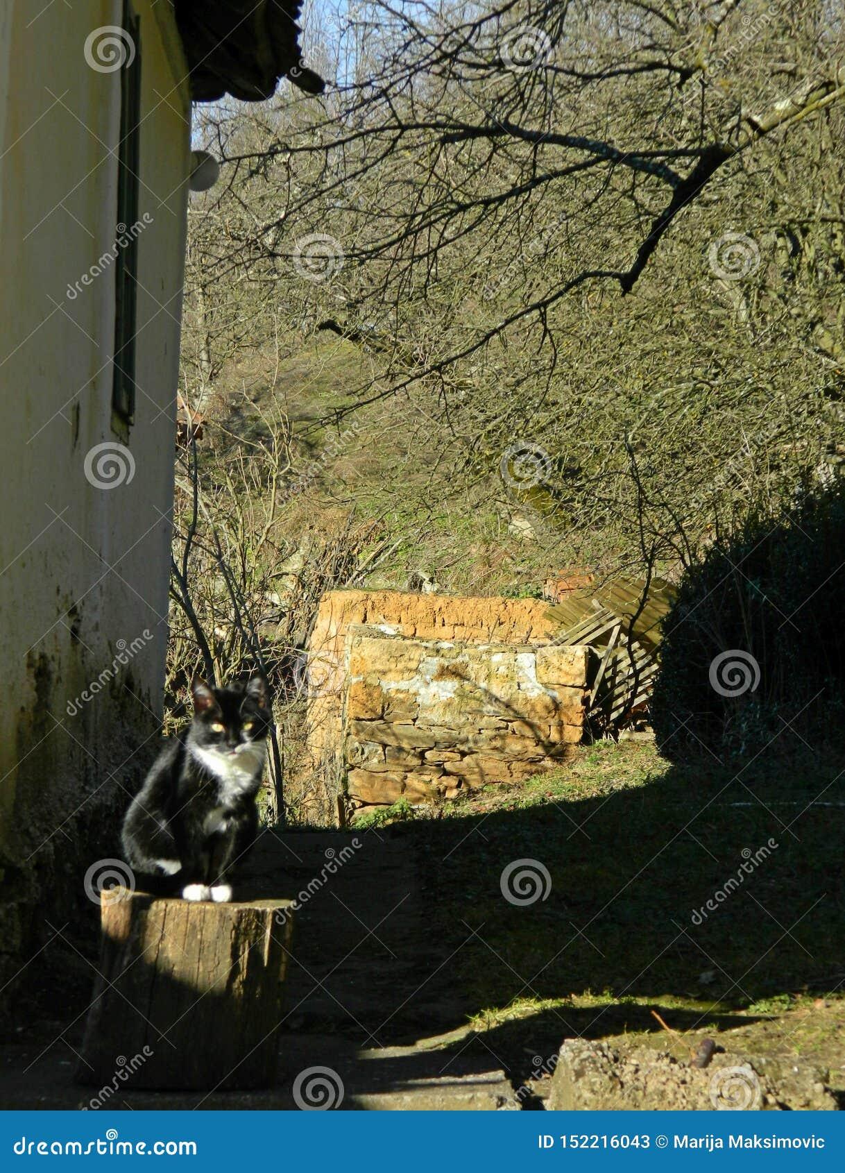 Wioska kota obsiadanie na fiszorku