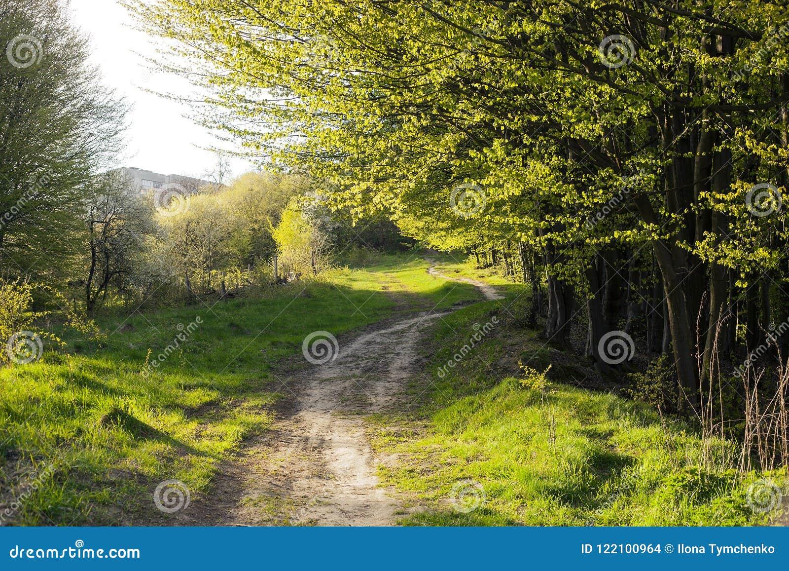 Wiosna krajobraz z footpath w zielonej trawie blisko mgłowego lasu