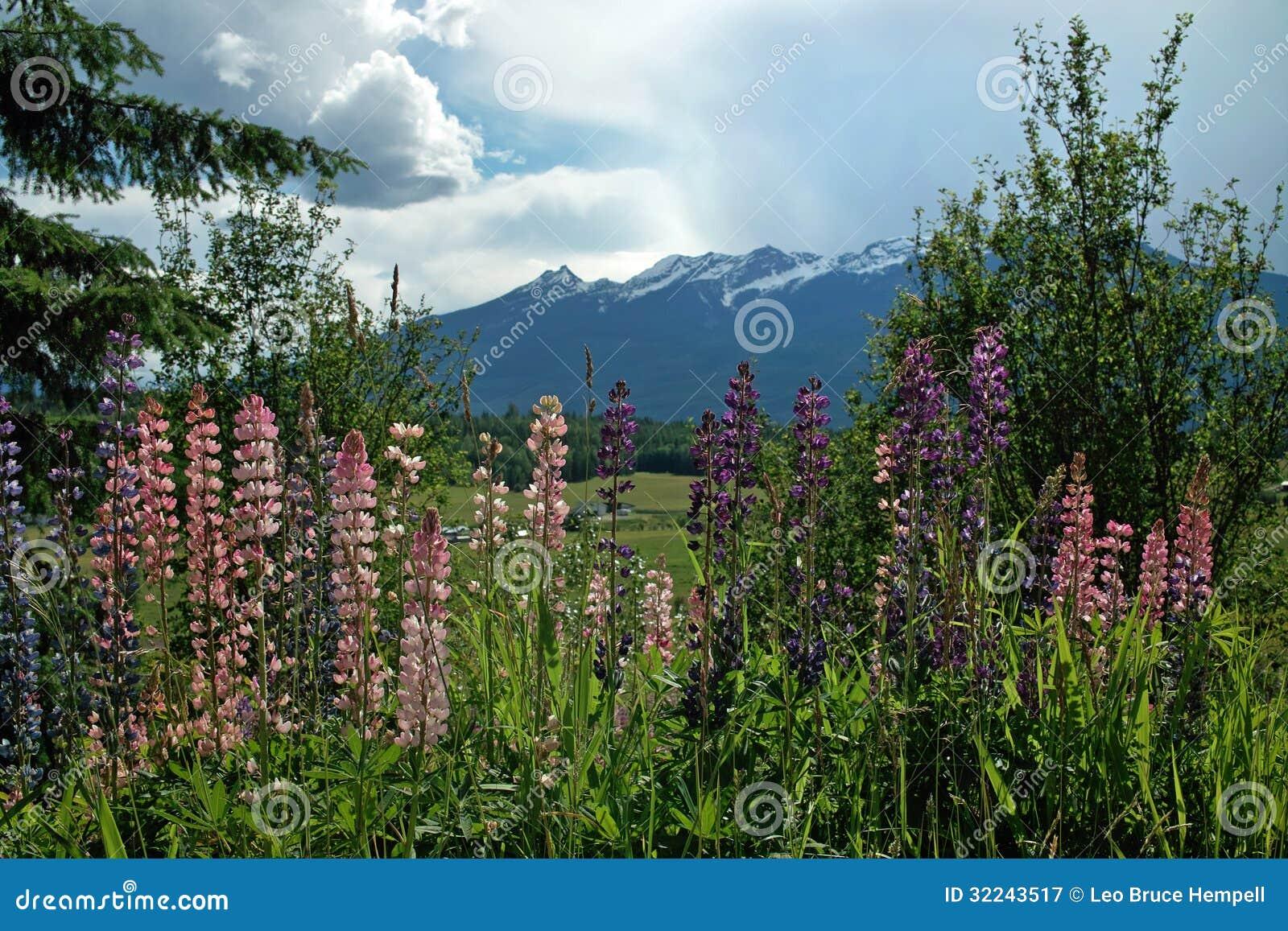 Wiosna kwiaty autostrada B.C. Kanada, BC