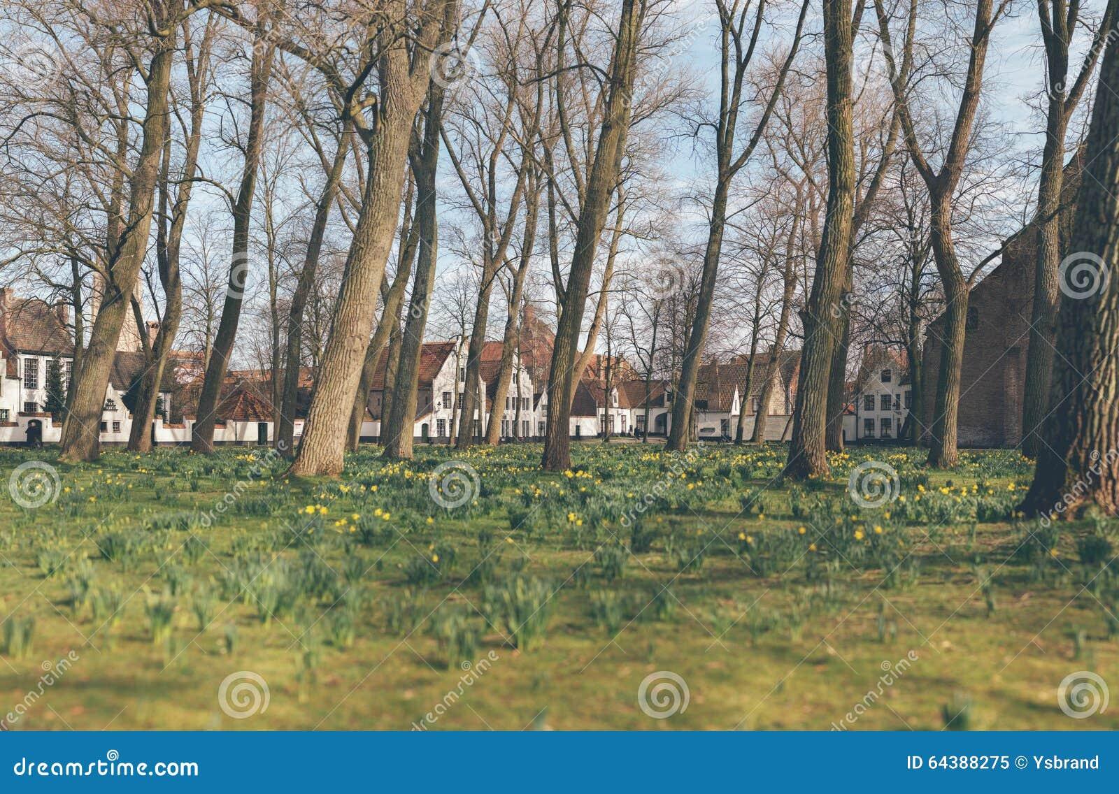 Wiosna kwitnie kwitnienie w miastowym parku