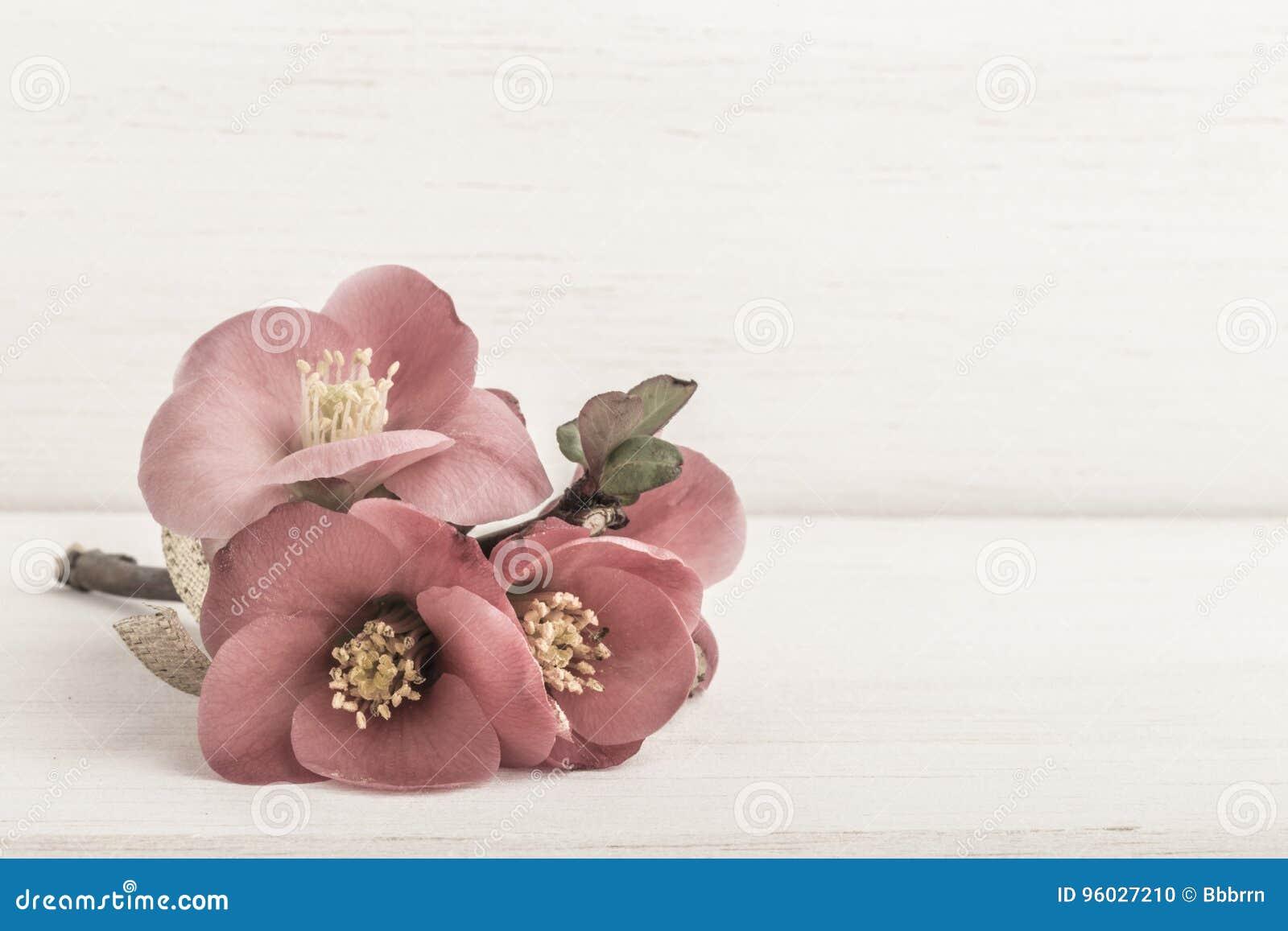 Wiosna kwitnie na drewnianym tle
