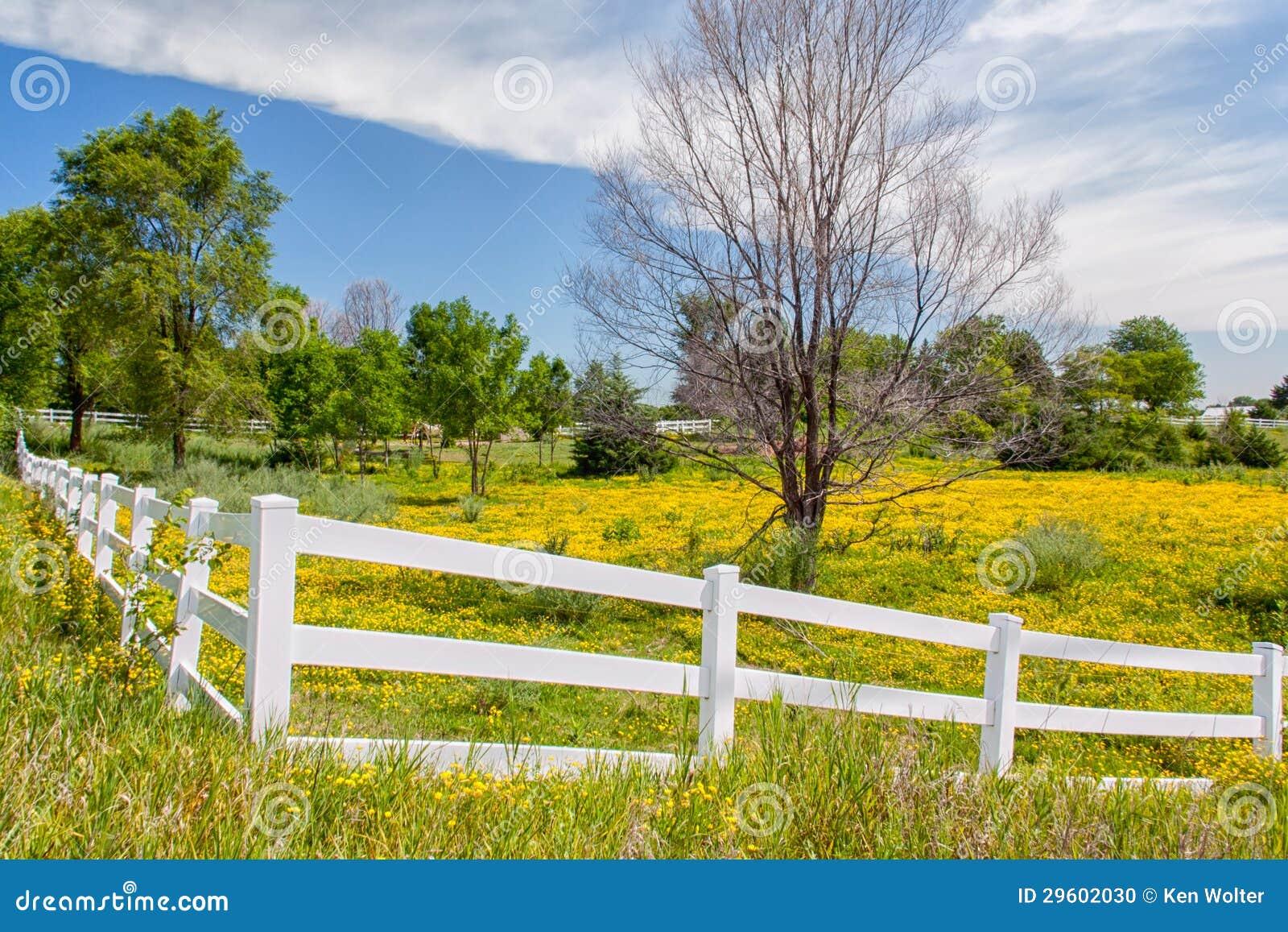 Wiosna Kwitnie w ogrodzenie Wykładającym paśniku w Środkowy Zachód prerii