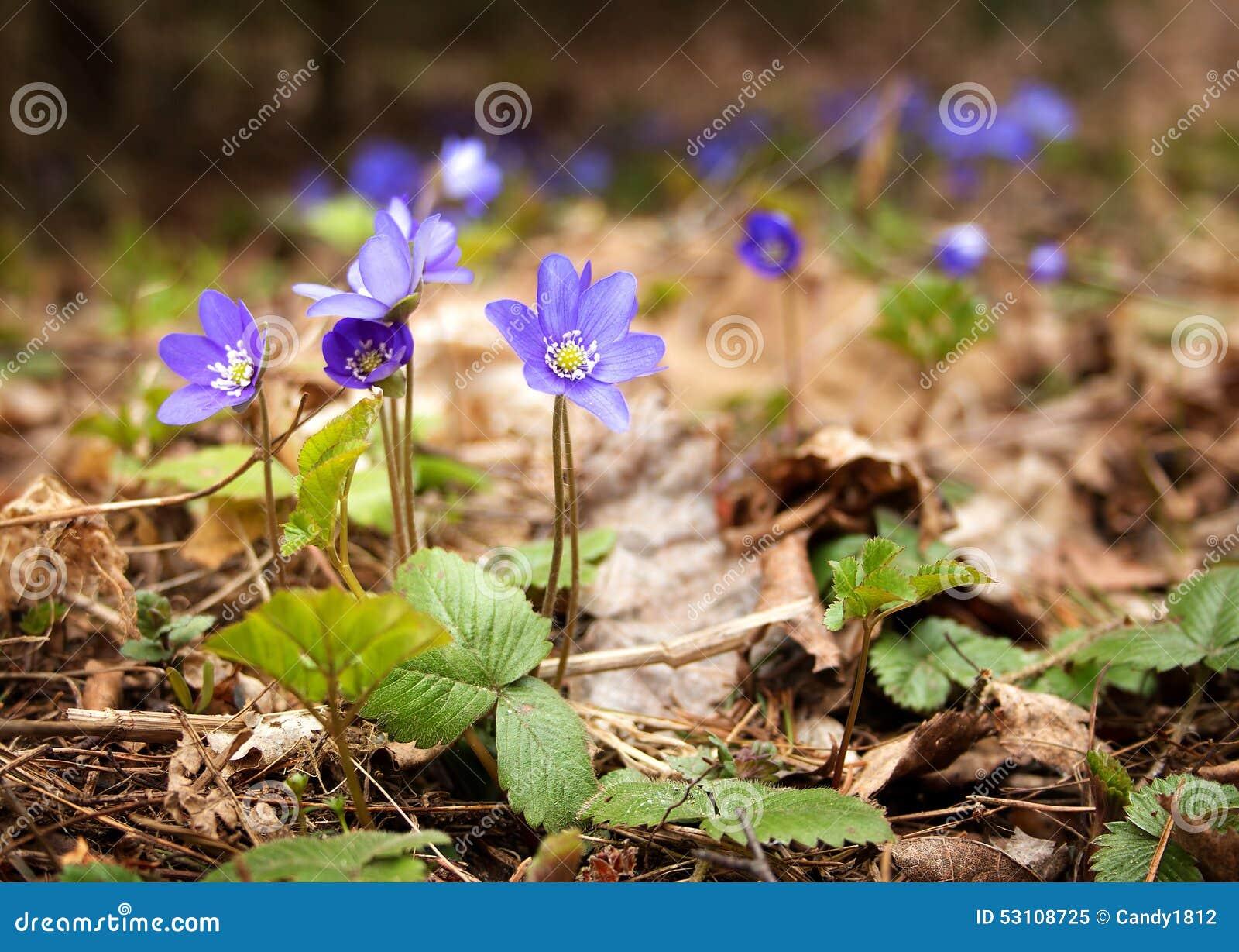 wiosna lasów