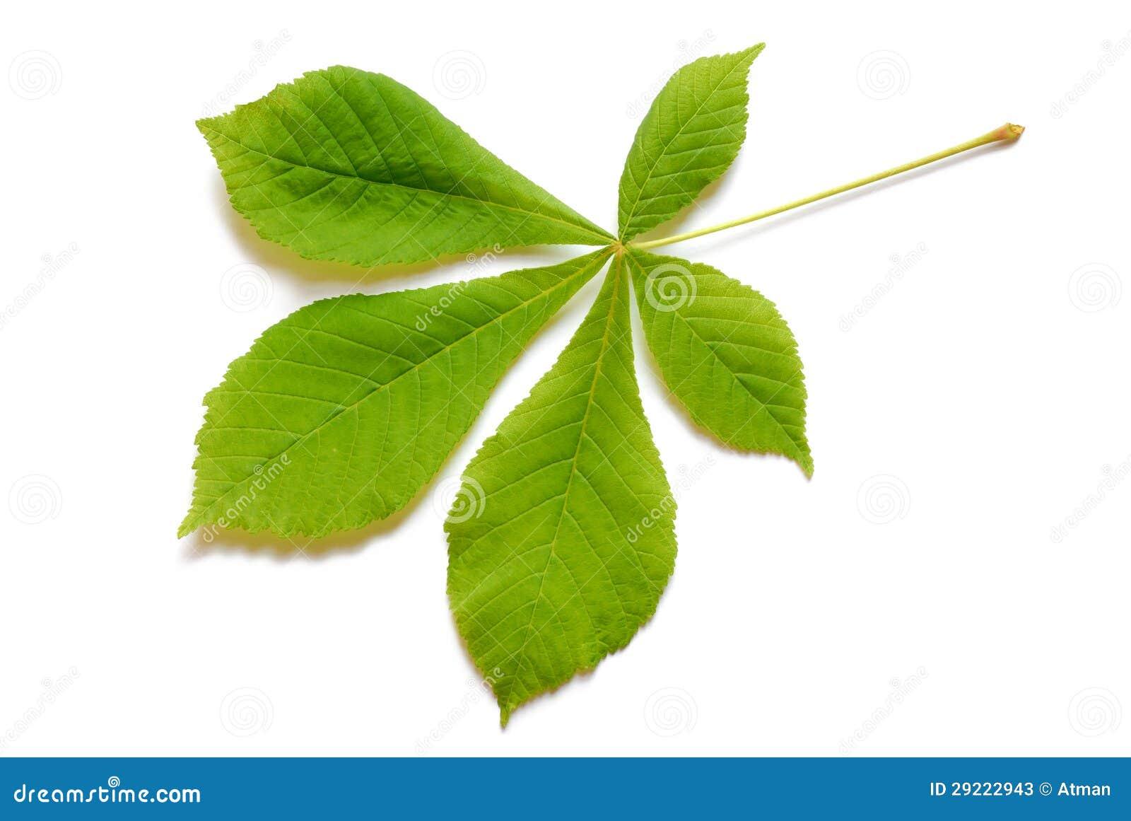Wiosna liść