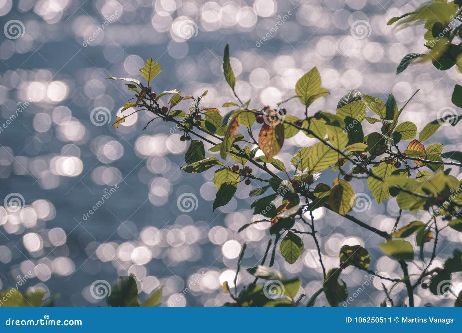 Wiosna opuszcza bujny z plamy tłem - rocznika filmu spojrzenie