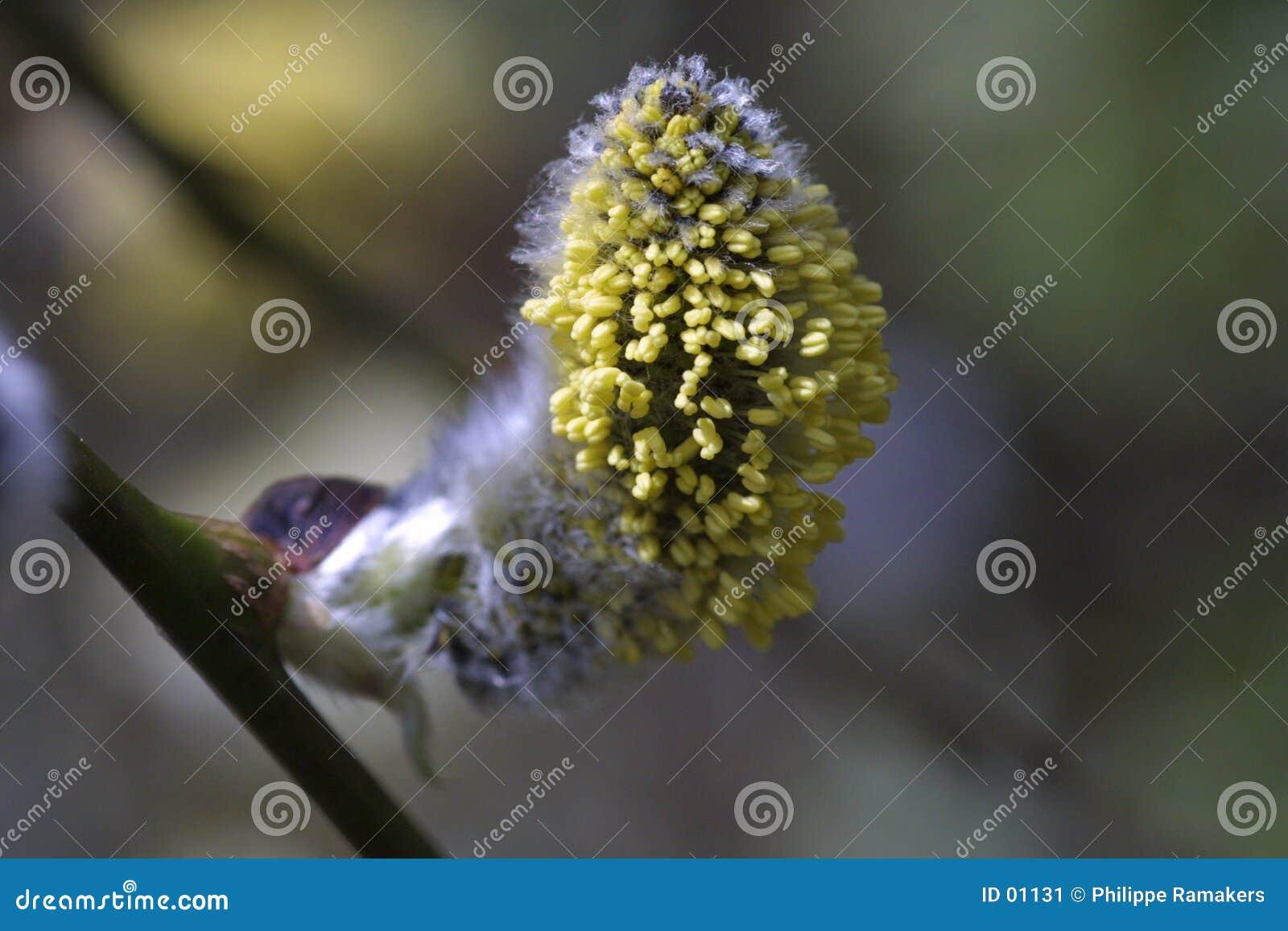 Wiosna roślin