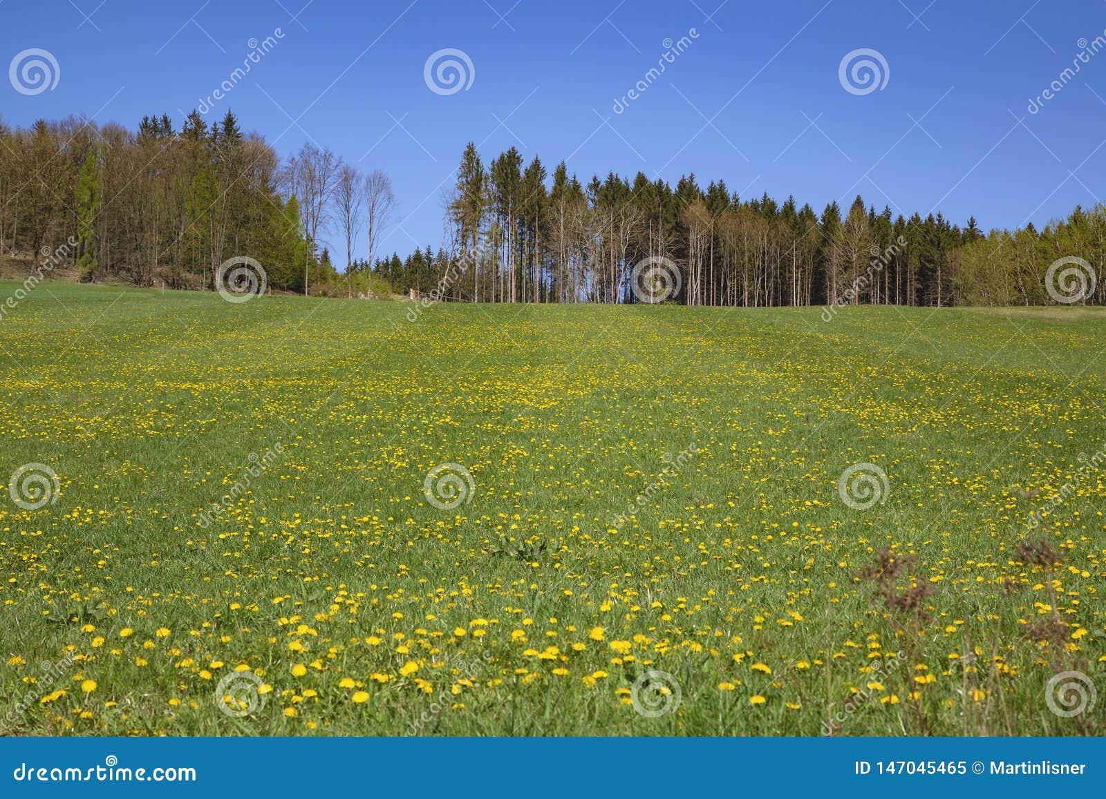 Wiosna wiejski krajobraz w republika czech