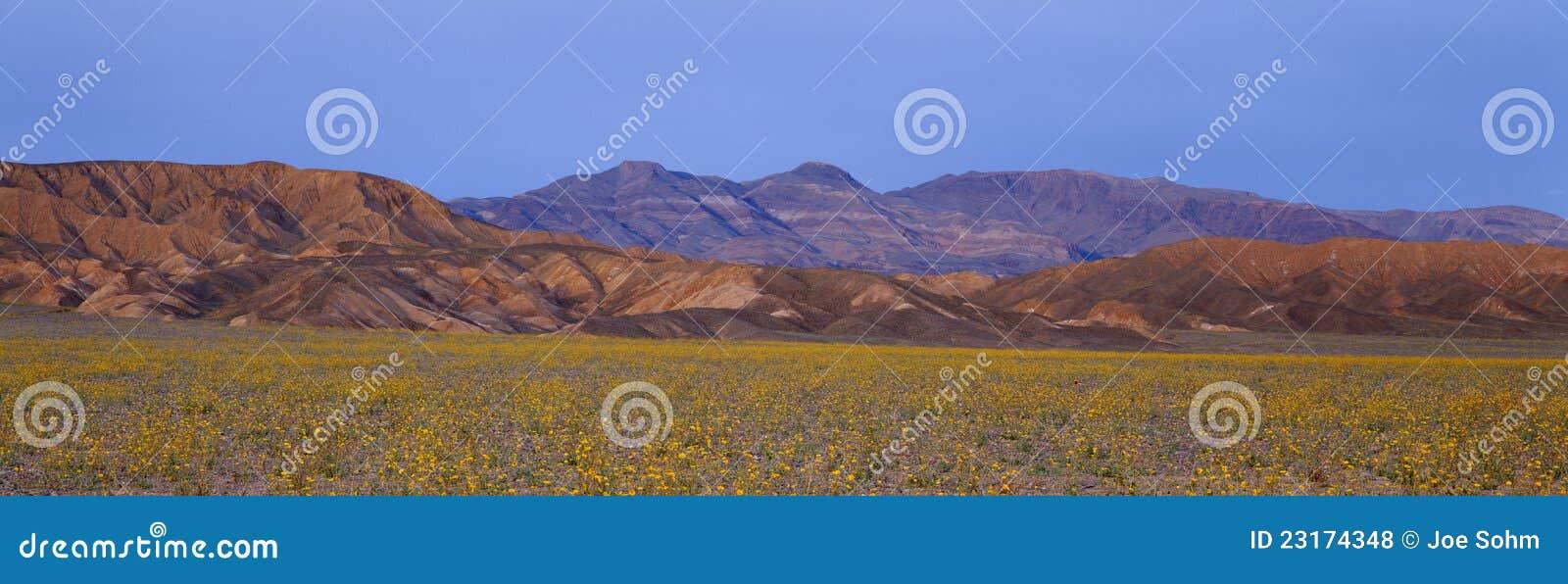 Wiosna Wildflowers