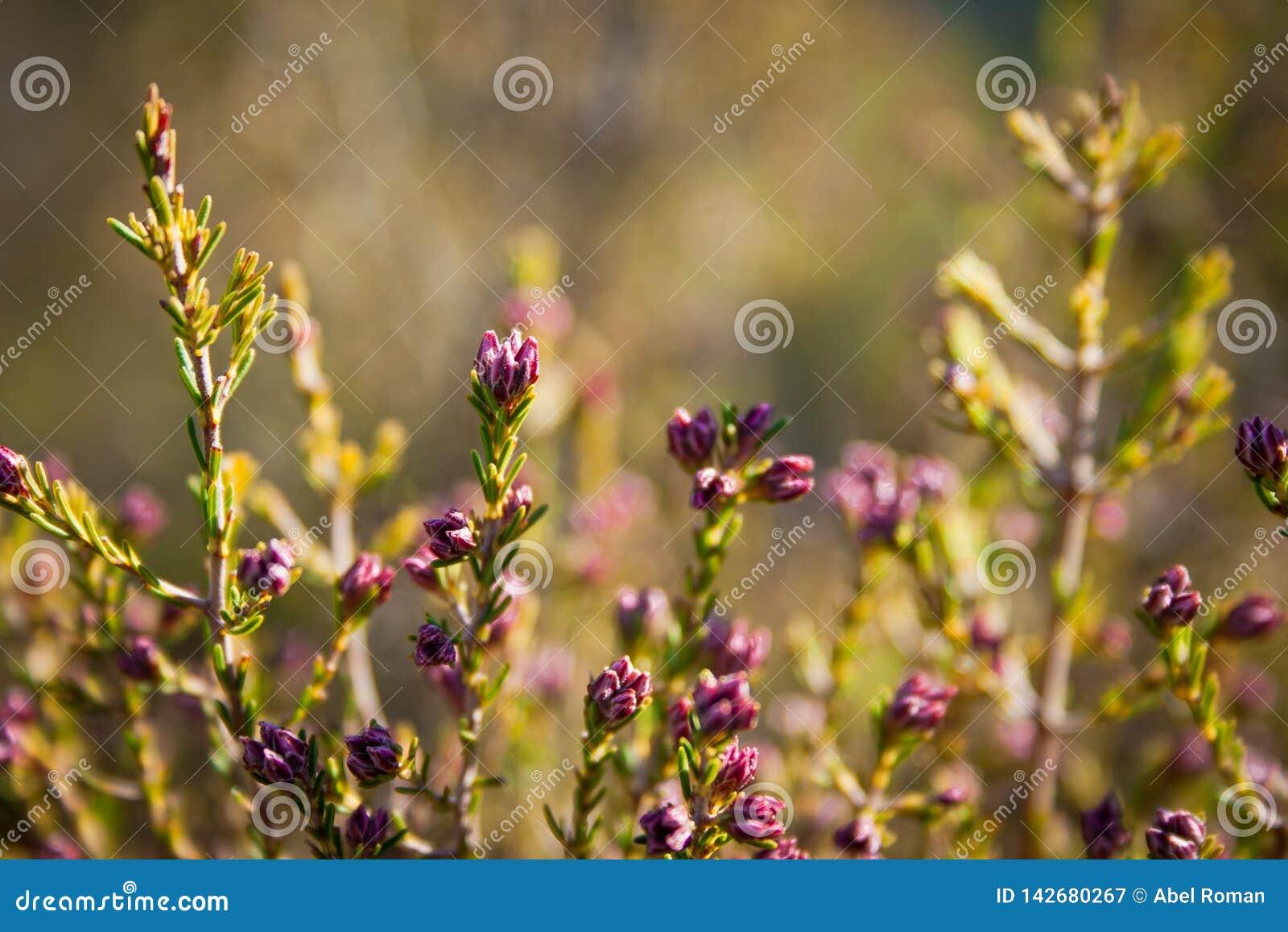 Wiosna zaczyna z kwiatami