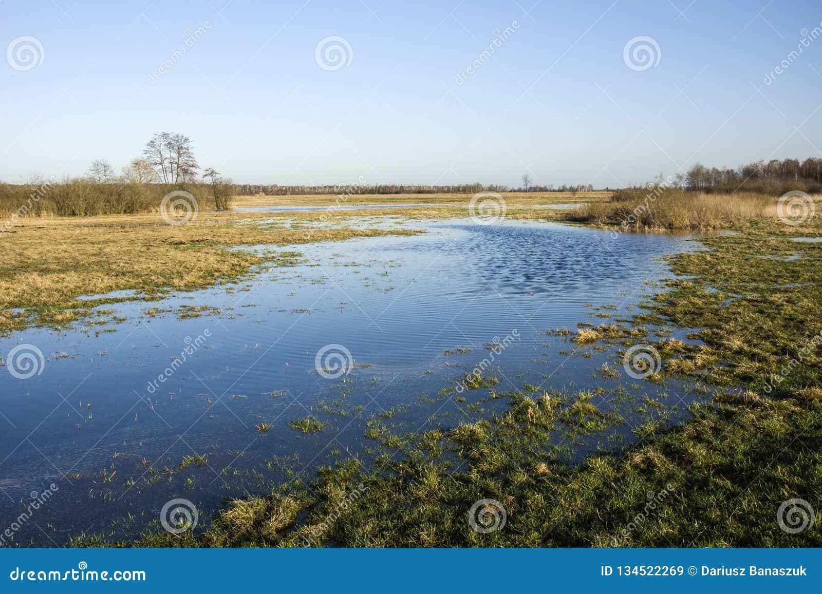 Wiosny łąka zalewająca z wodą