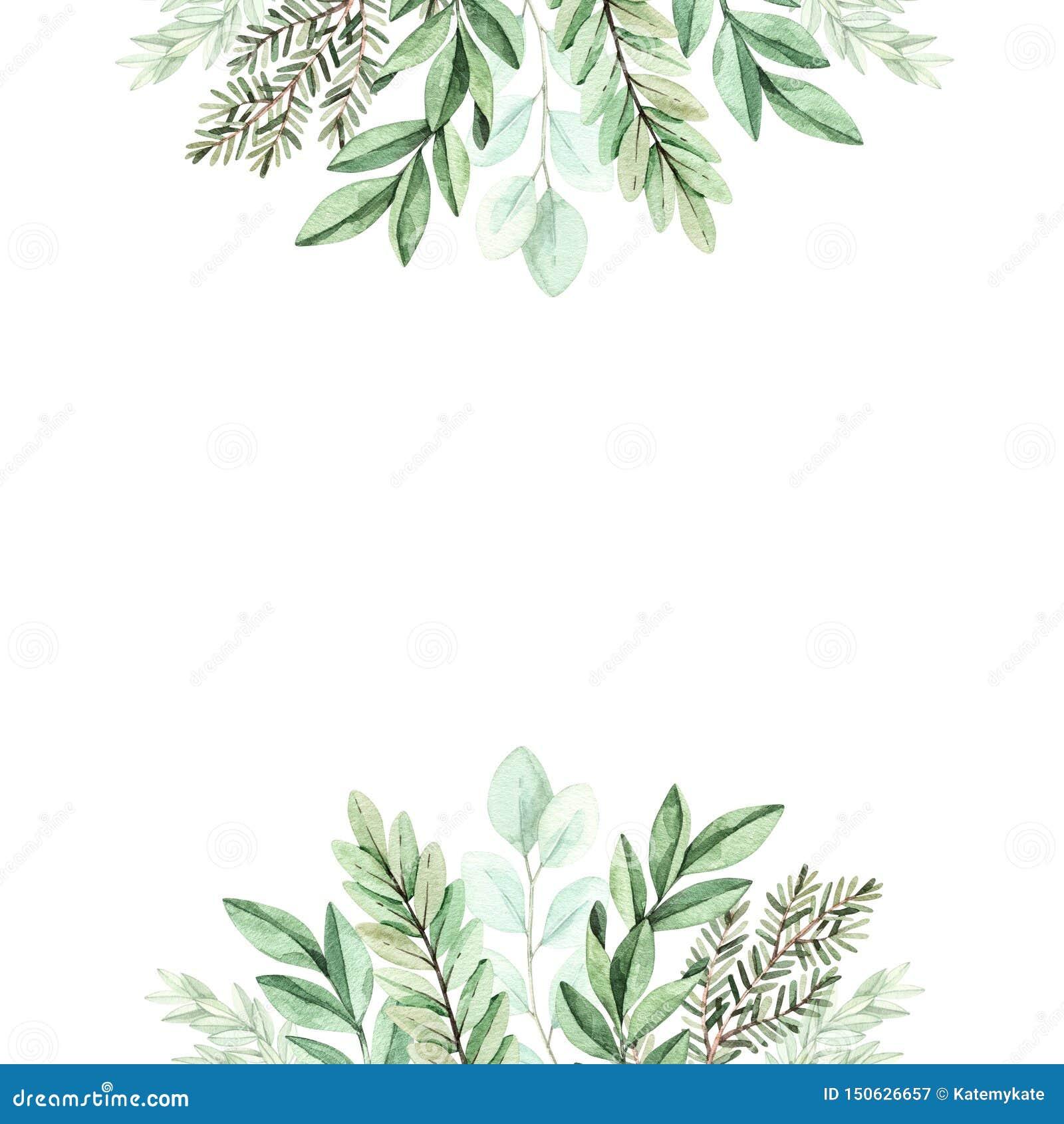 Wiosny akwareli ilustracja Botaniczna rama z eukaliptusem, jodła rozgałęzia się i opuszcza greenfield elementy kwieci?ci projekt?