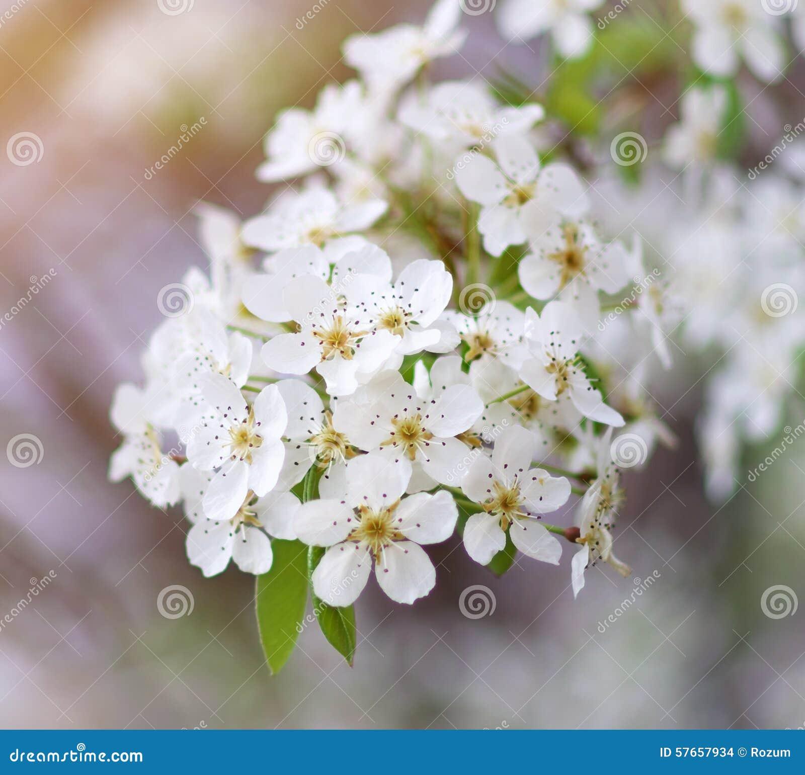 Wiosny drzewo w kwiacie
