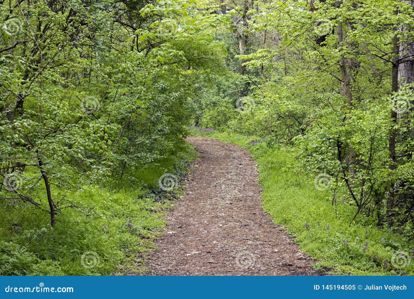 Wiosny Forrest ślad