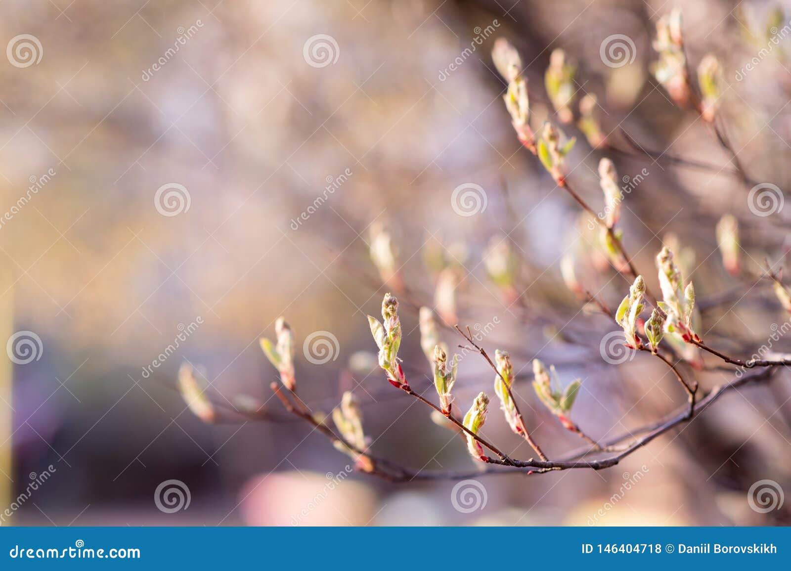 Wiosny gałąź z młodymi liśćmi