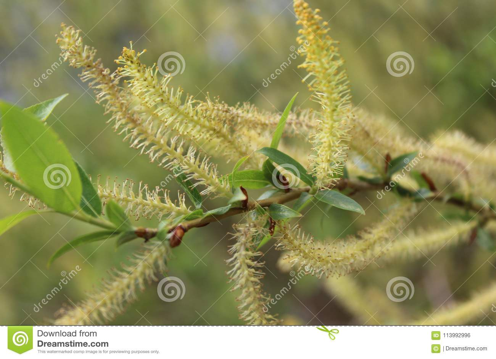 Wiosny kwiecenie Drzewa są w kwiacie przyszła wiosna Obfitość zieleń