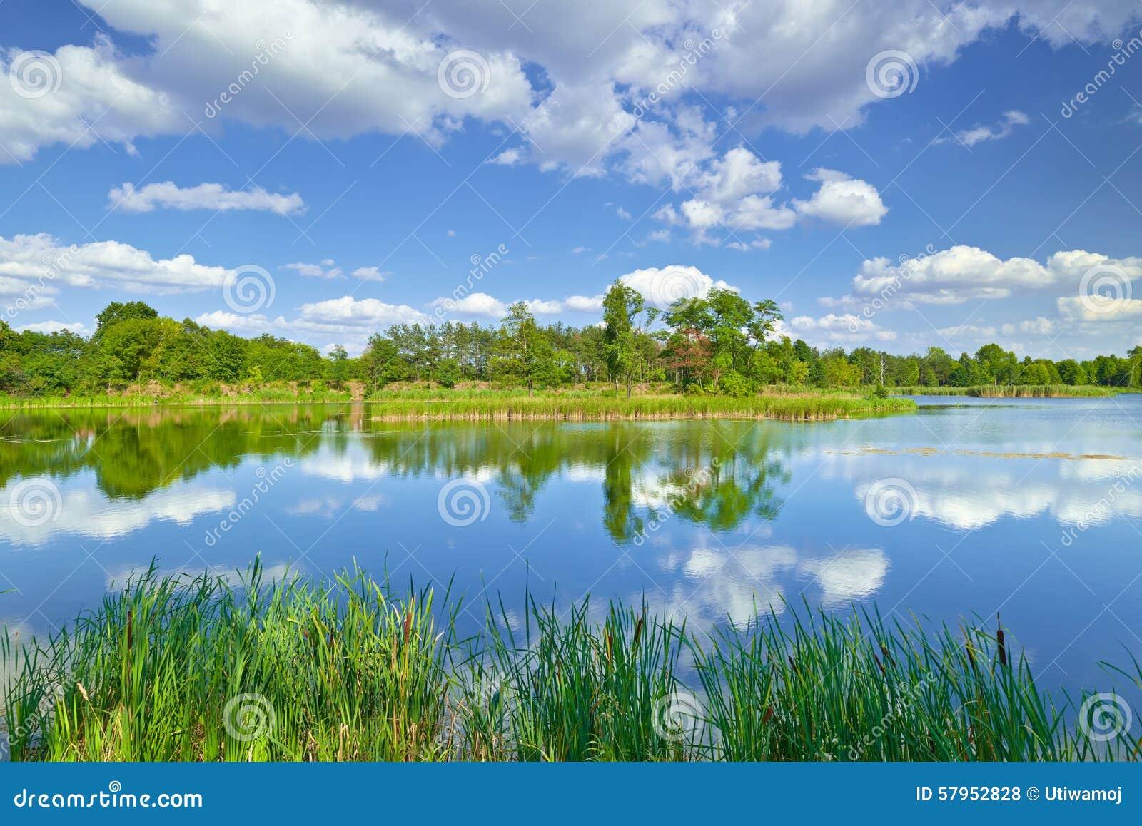 Wiosny lata krajobrazu niebieskiego nieba chmur stawu zieleni rzeczni drzewa