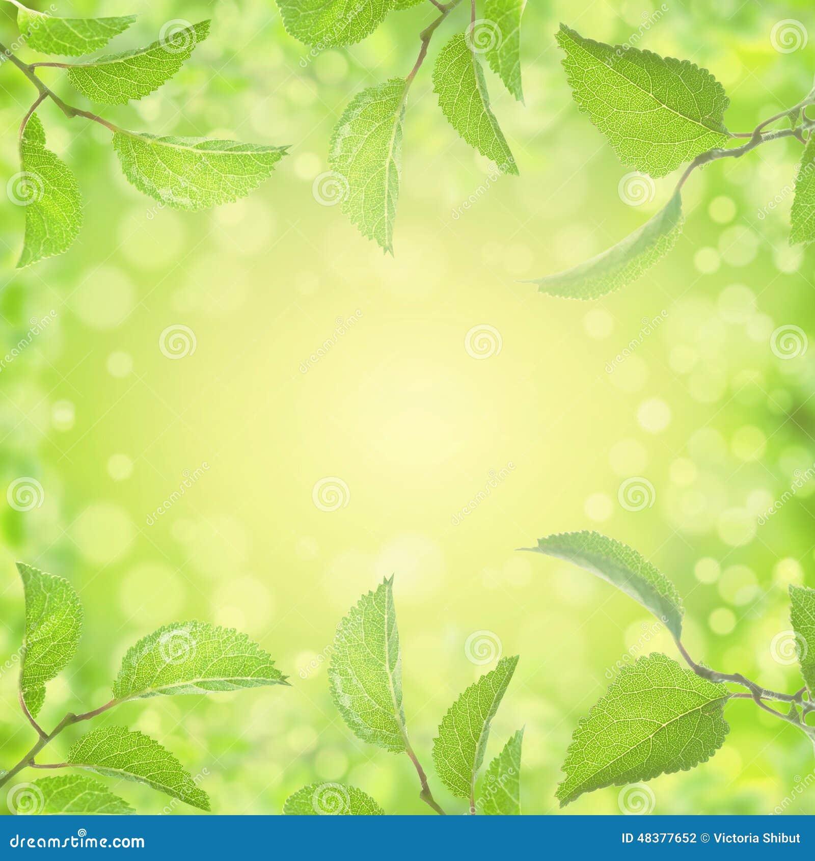 Wiosny lata liści tło z słońca bokeh i światłem