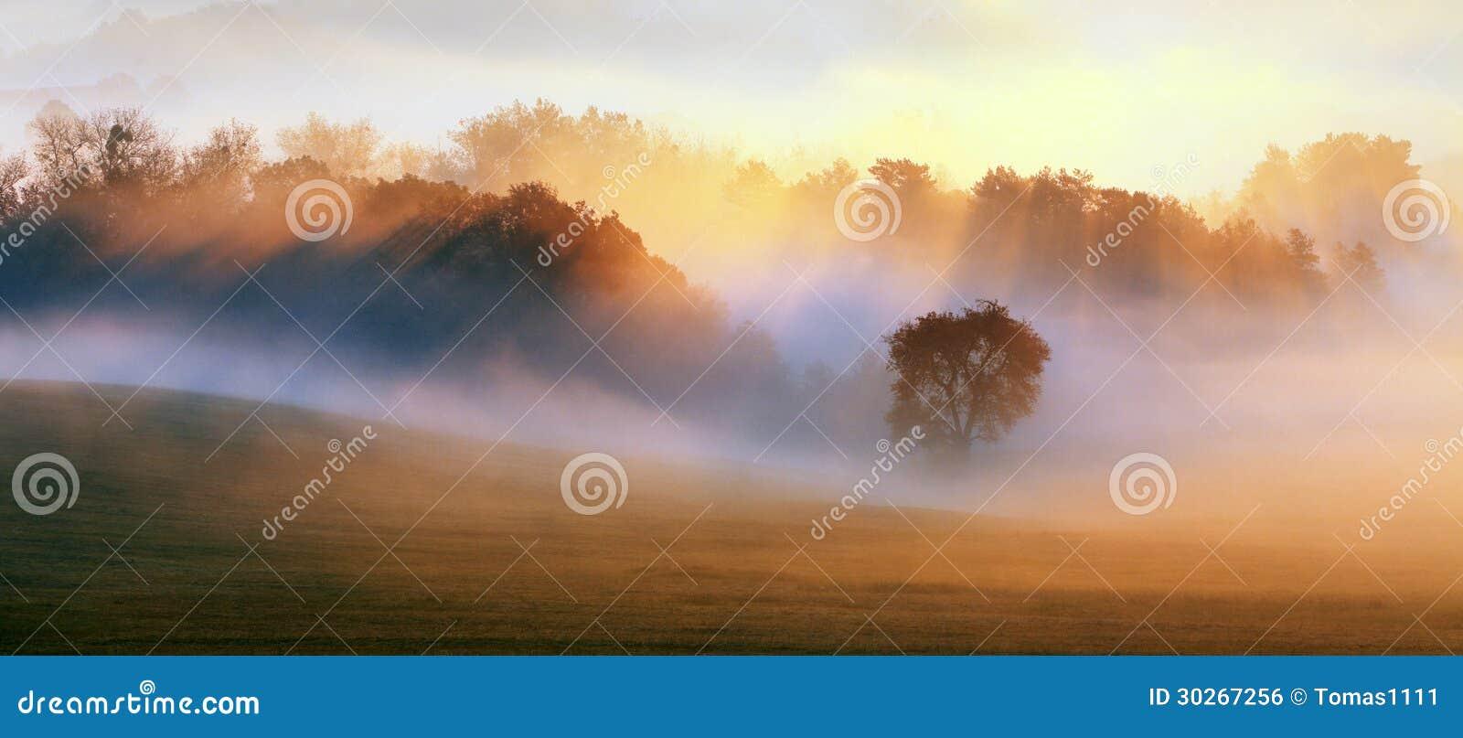 Wiosny mgła, drzewa jest mokrym, wilgotnym mgłą las,