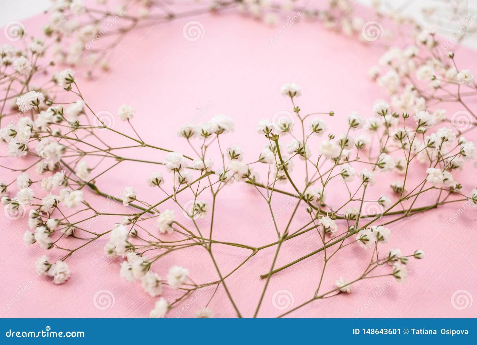 Wiosny minimalistic tło z wiankiem delikatna białych kwiatów łyszczec na różowym tle