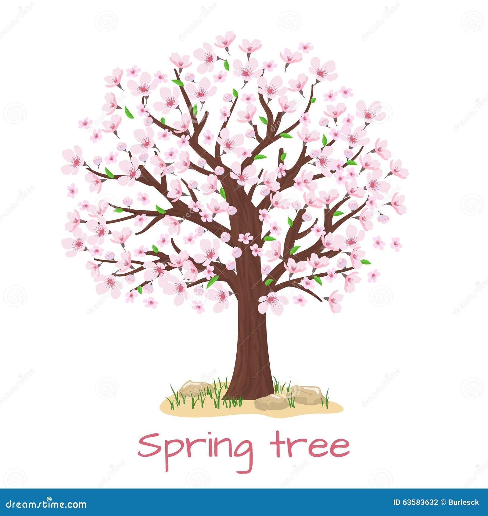 Wiosny okwitnięcia czereśniowego drzewa wektor