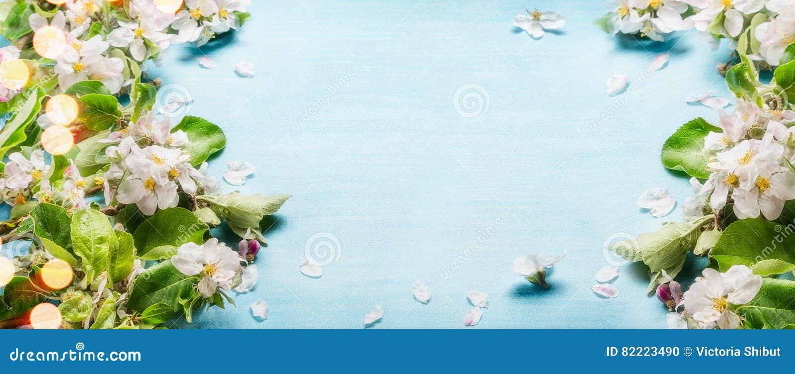 Wiosny okwitnięcie kapuje na błękitnym turkusowym tle, odgórny widok, rama, rabatowa wiosna