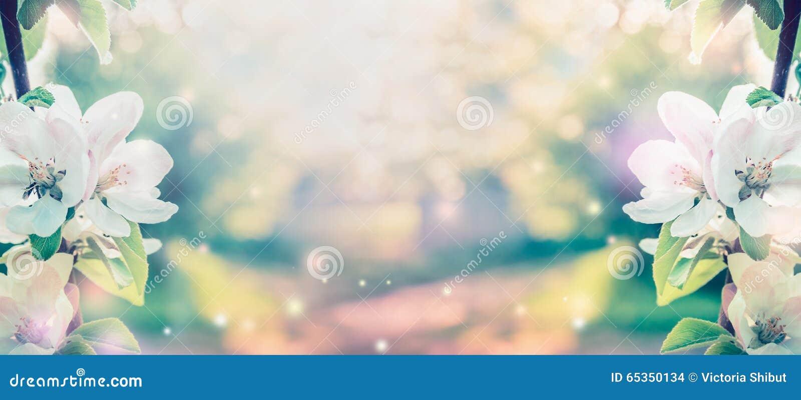 Wiosny okwitnięcie nad zamazanym natury tłem z światłem słonecznym, sztandar