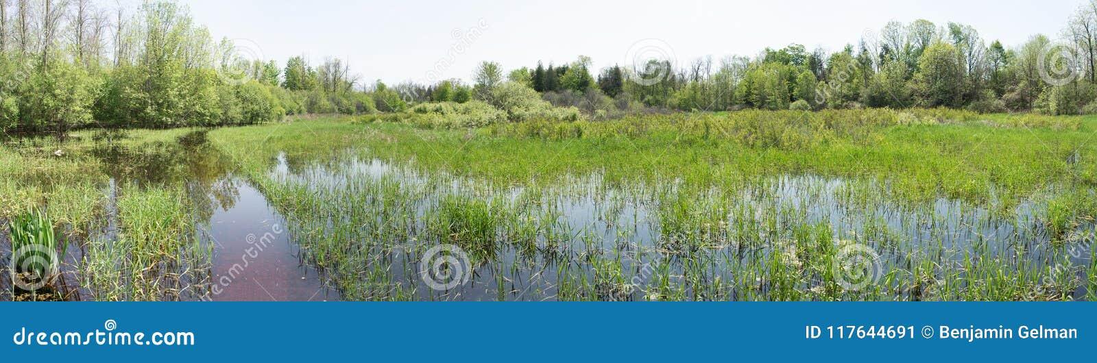 Wiosny powodzi łąki