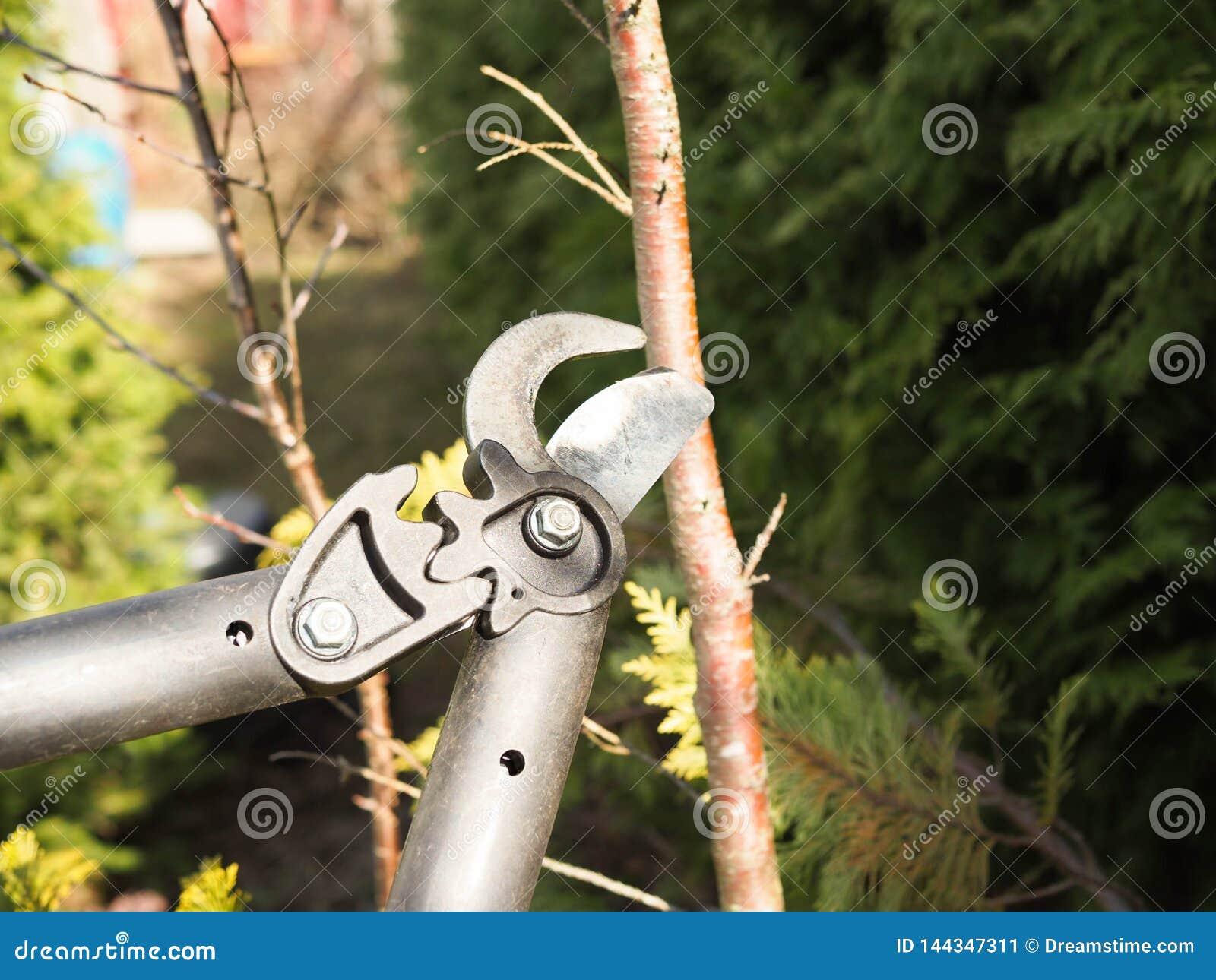 Wiosny przycinać treesn