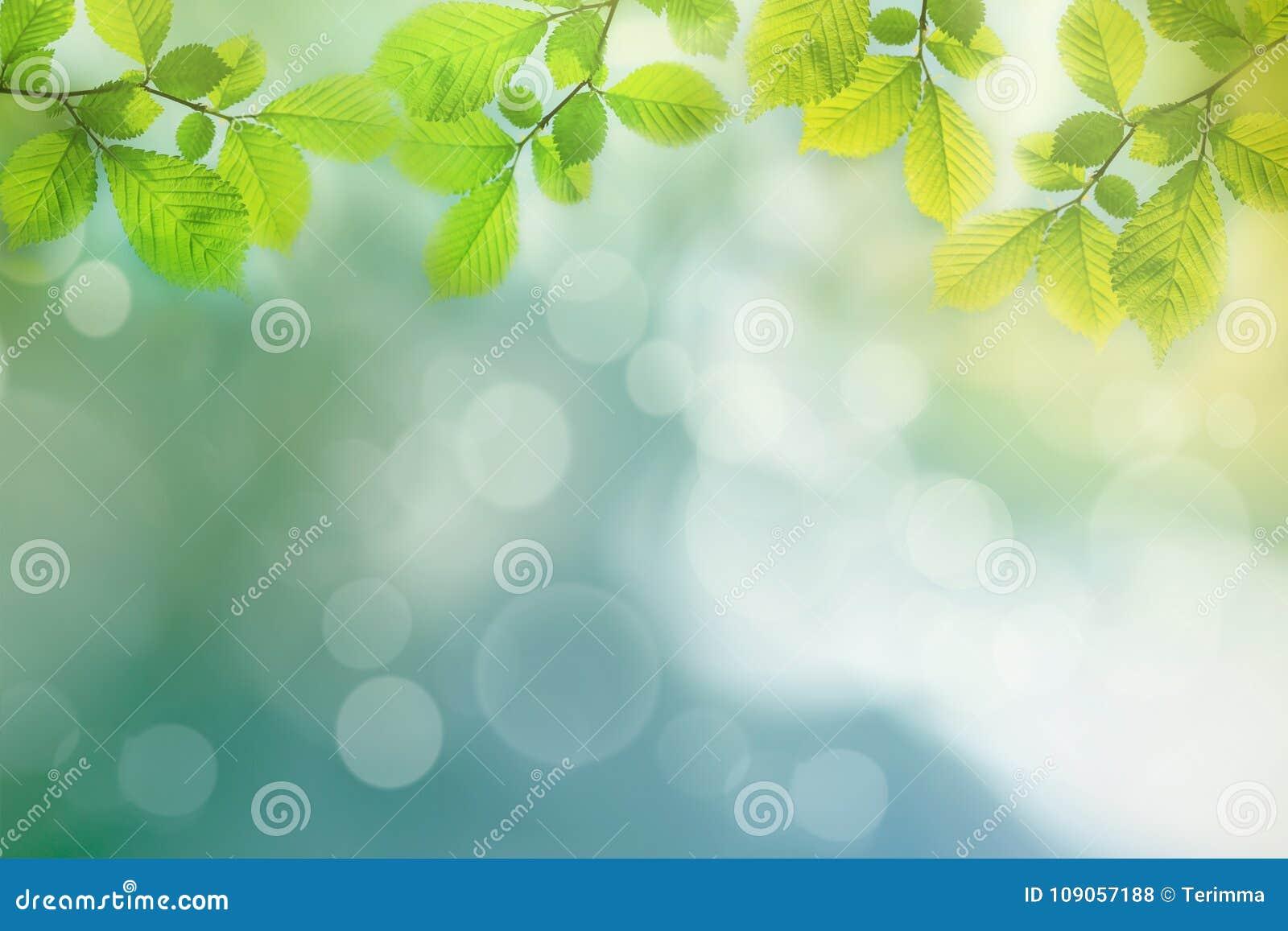 Wiosny tło, zielony drzewo opuszcza na zamazanym tle