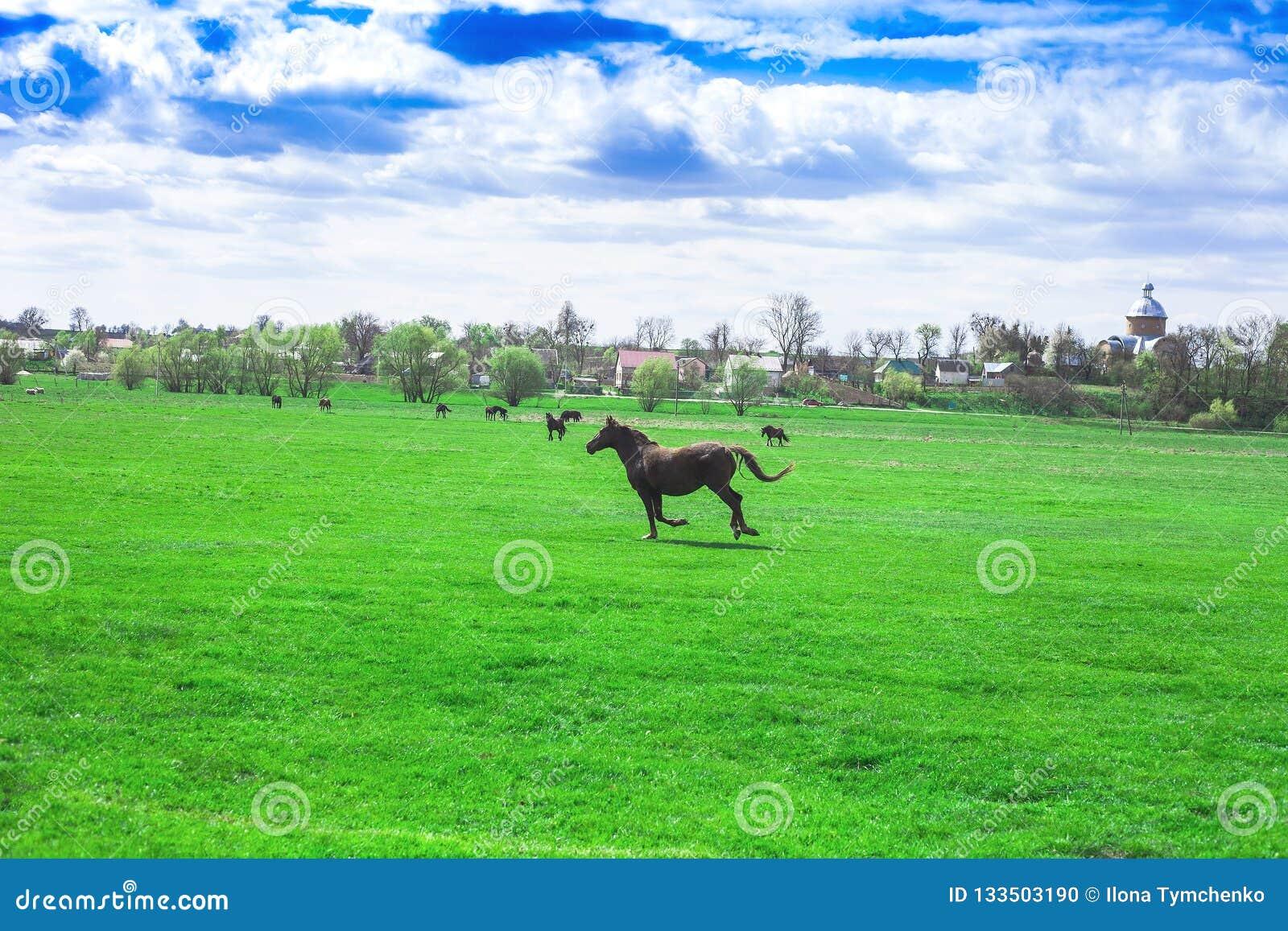 Wiosny wioski krajobraz i działający koń w zielonych polach