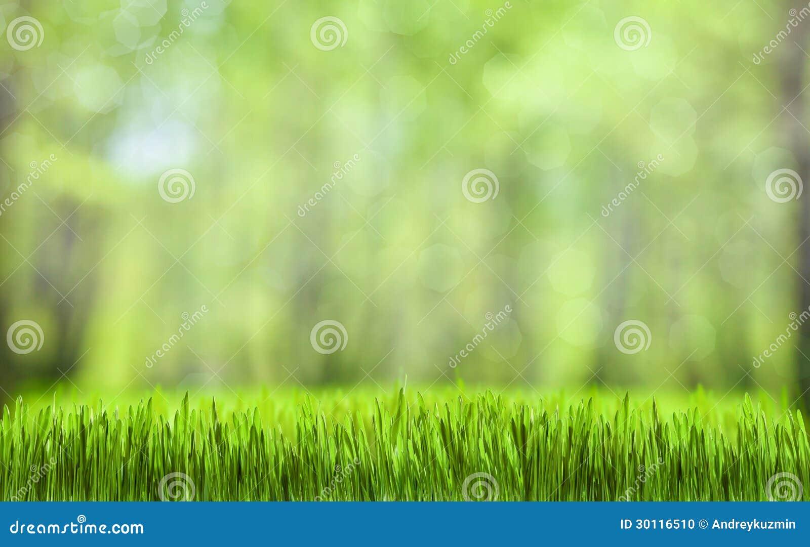 Zielonej trawy natury abstrakcjonistyczny tło