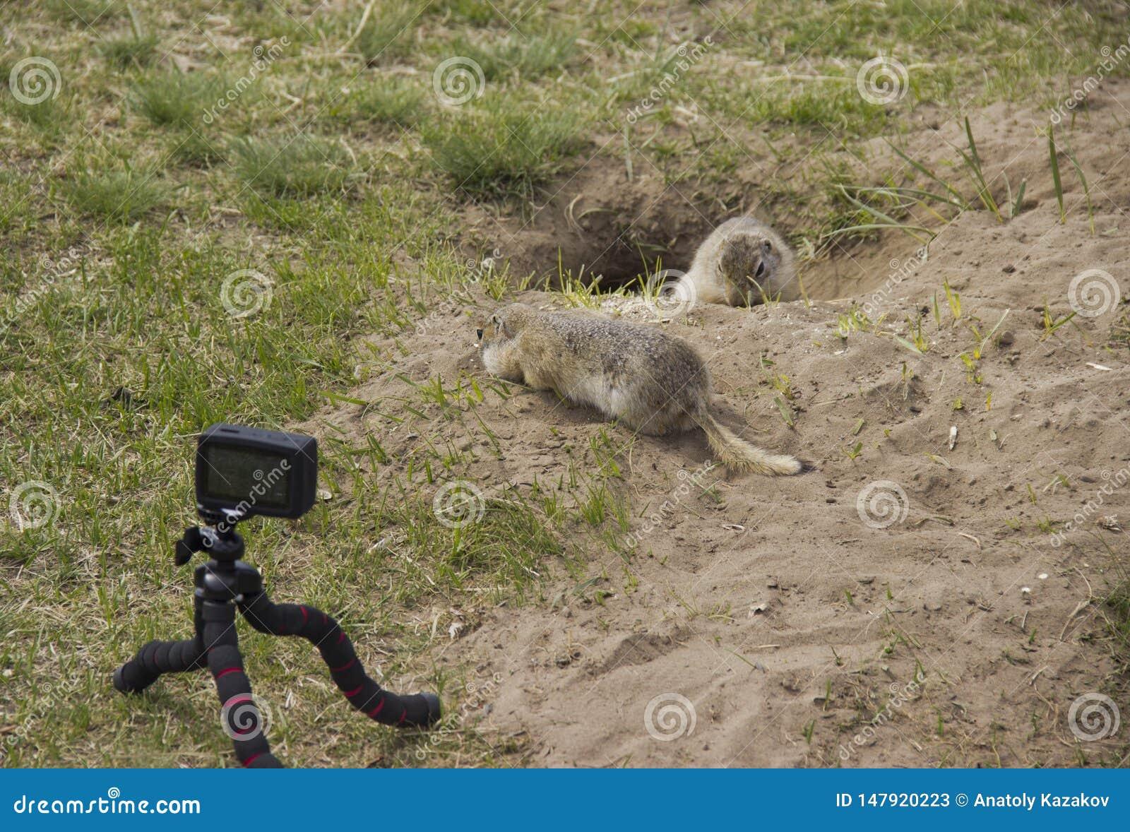 Wir entfernen den Gopher auf einer Videokamera