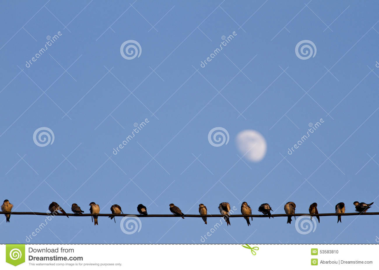Lined-up birds on wire