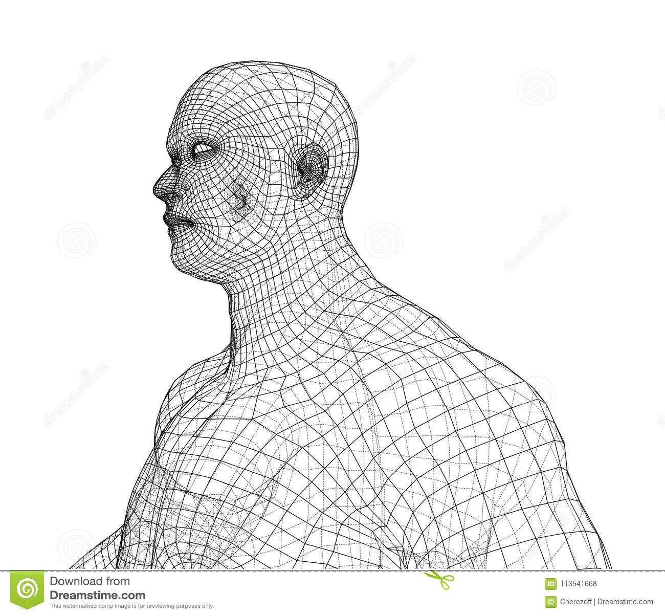Wire Frame Athlete Body On White Background Stock Vector ...