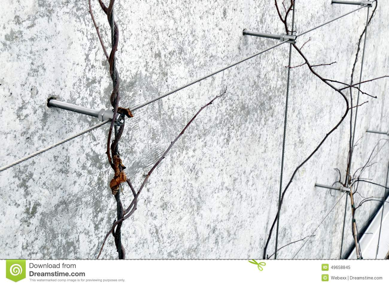 Wire Trellis Stock Photo Image 49658845