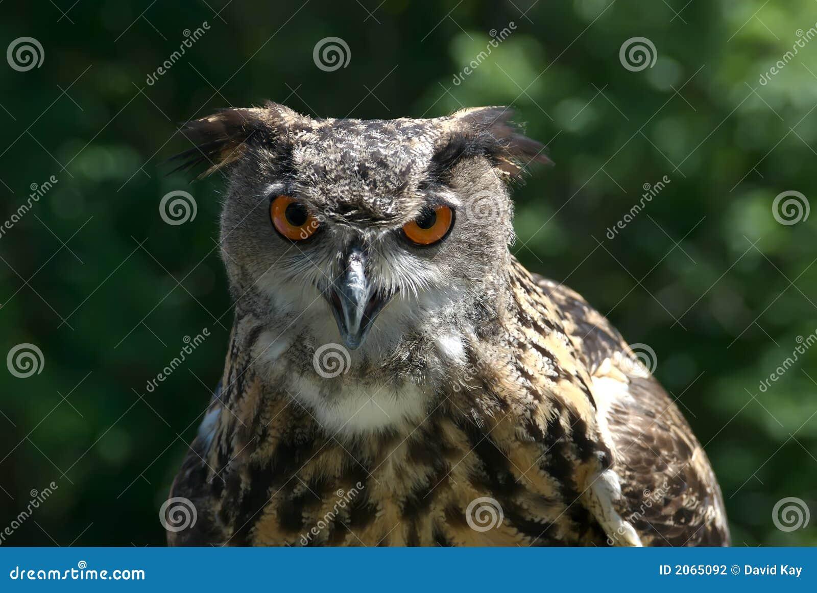 Wisdom Stock Photo Image Of Feathers Symbols Determination 2065092