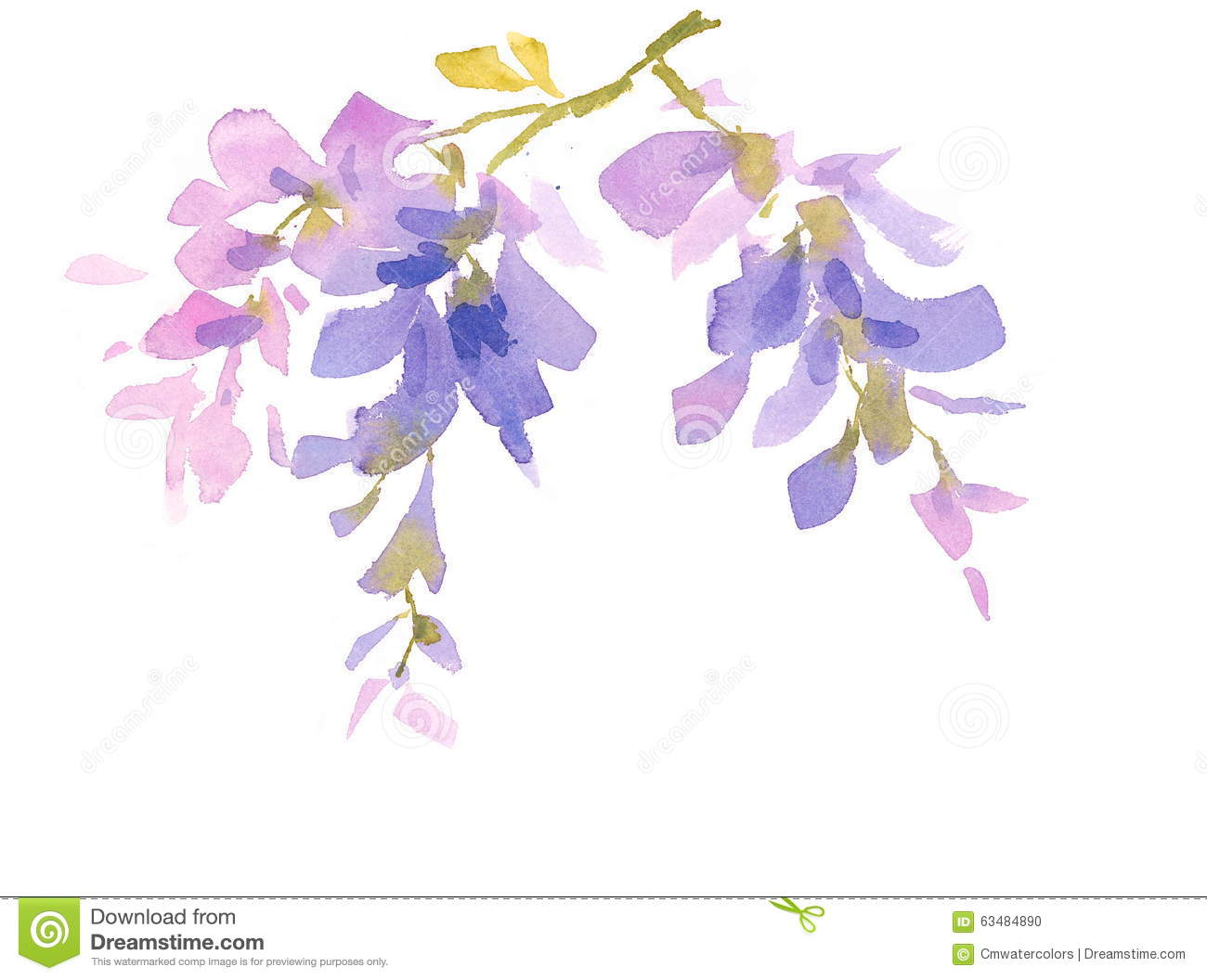 Wisteria Branch Watercolor Flowers Illustration Hand