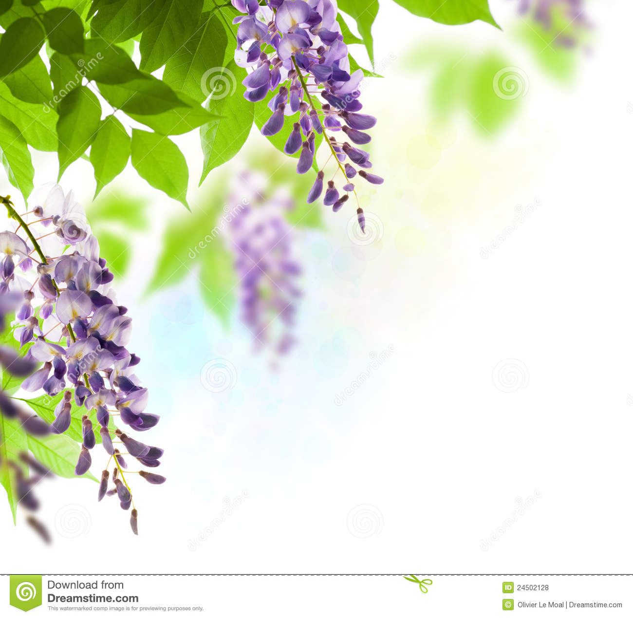 Wisteria Leaf And Flower In Spring Royalty Free Stock Photos - Image ...