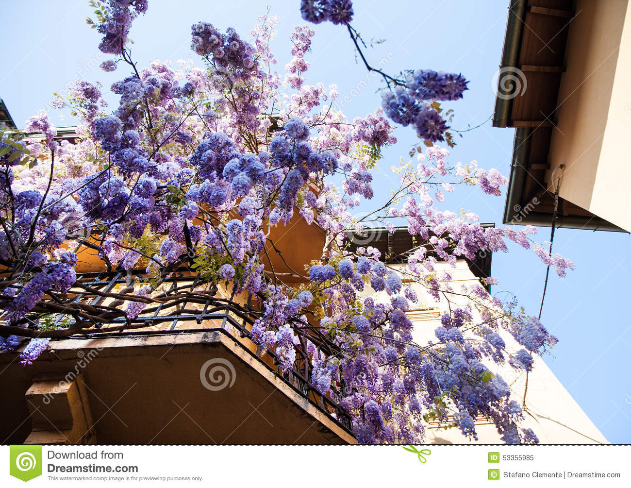 Wisteria plant stock photo image 53355985 for Classic house plants