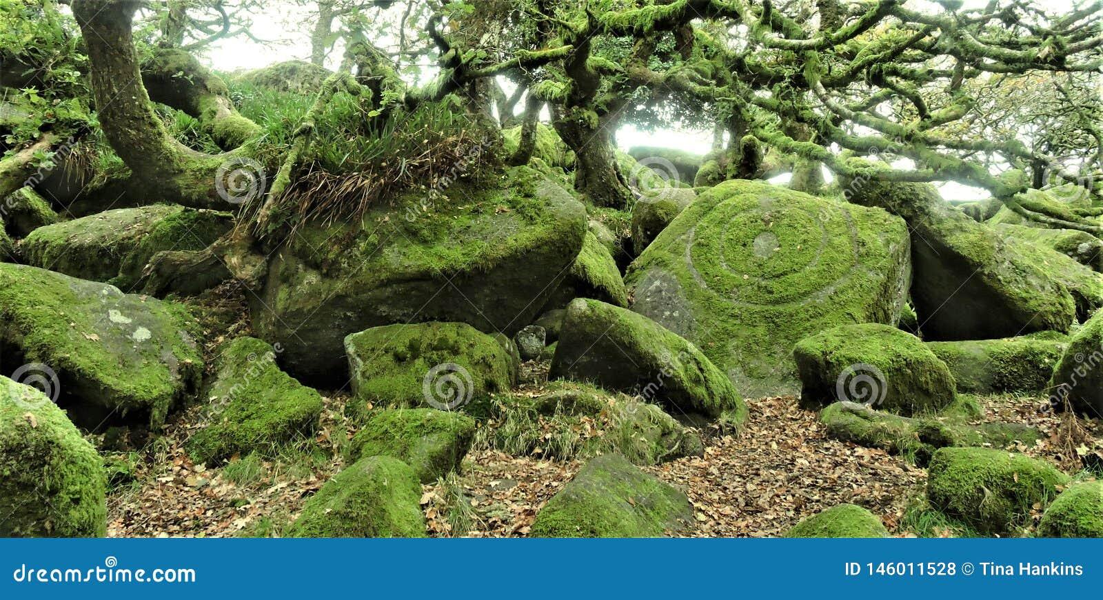 Wistmans-Holz in Devon - der Stein des Druiden?