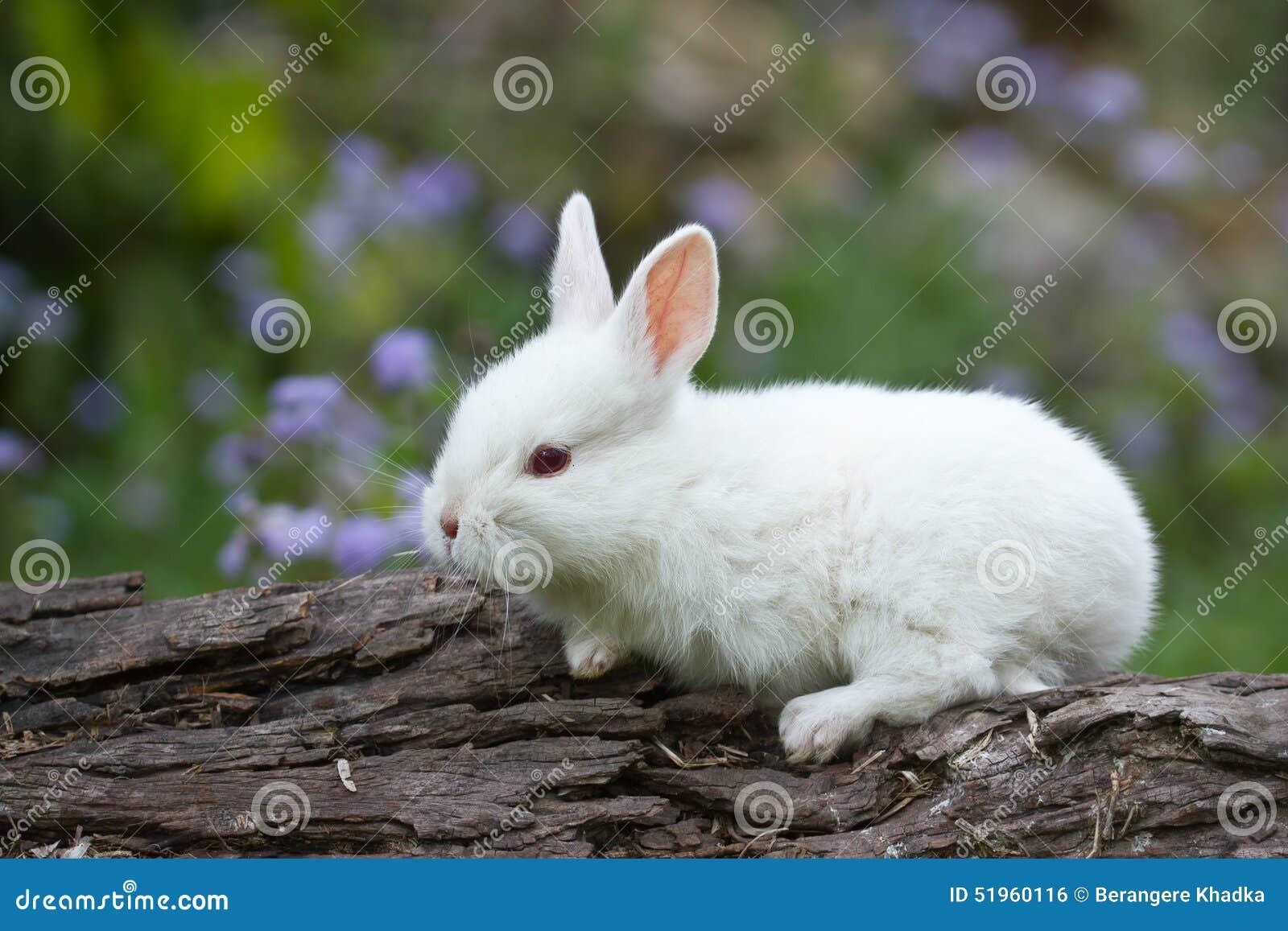Wit baby wit konijn op boomstam