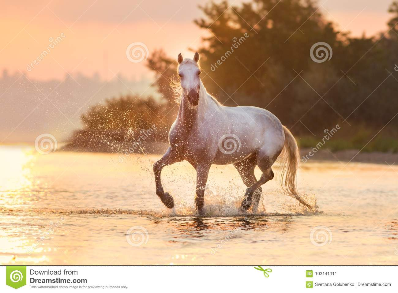 Wit $c-andalusisch paard in water